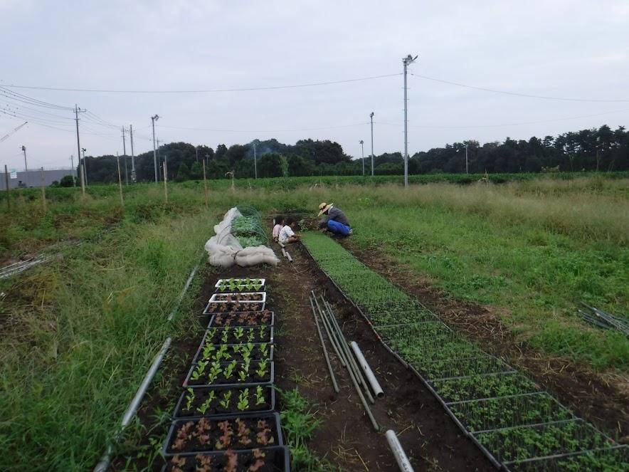 右の一列が苗作りちゅうの玉ねぎ。奥で草取りをしています