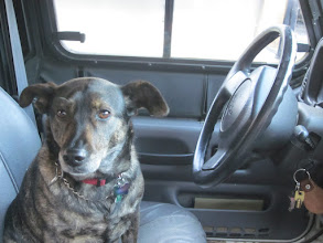 Photo: Sula drives a Jeep