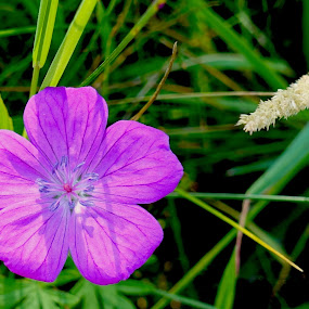 Wild flower by Philippe Smith-Smith - Flowers Flowers in the Wild ( fleur, nature, flora, wild, flower )