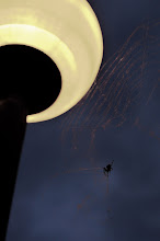 Photo: The Spider & The Moon