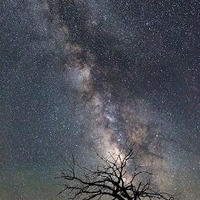 Lone Tree by Jim Talbert - Landscapes Starscapes ( night photography, tree, stars, kansas, night sky, milky way, nightscape )