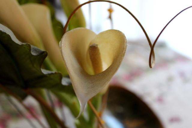 Fiore e cuore di Francescamente