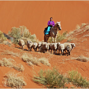 Sheep Herding by Nancy Young - People Professional People ( sand, desert, woman, indian, sheep,  )