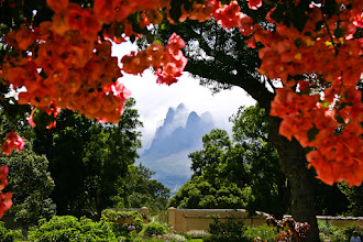 Photo: Here's an old photo of mine from back in 2004. I was on some travels passing through South Africa and during that trip a friend of mine +Darryl Pentz took me to visit Vergelegen Estate near Cape Town, which is where this photo was taken.  At the start of my trip I had just bought my first DSLR - a Canon 300D with kit lens. That camera went on to last me nearly two years, and it would likely have been a lot longer if I hadn't had a nasty accident while cleaning the sensor two days before I departed on a trip to Borneo. Important lesson learned... don't leave any maintenance until the last minute (and of course be careful when you clean your sensor)!