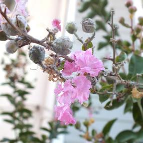 Sprig by Halime Pelitçi - Nature Up Close Flowers - 2011-2013 ( türkiye, sprig flower, turkey, sprig, flower )