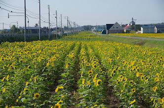 Photo: 北竜町の彩どり・9月の1