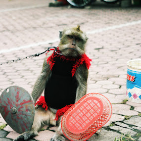 Monkey Actor by Andi Firdaus - Animals Other