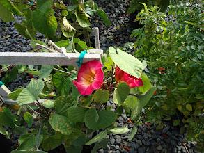 Photo: Bloom of Honeysuckle