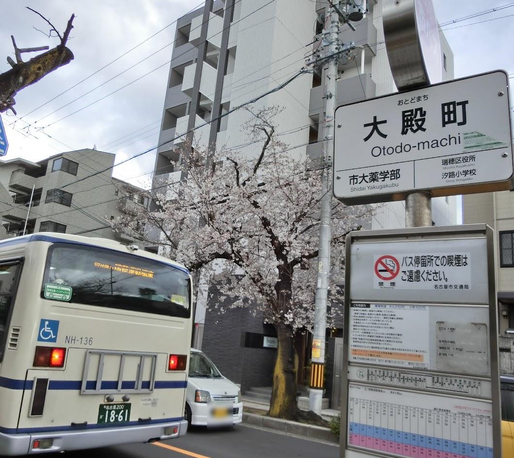 大殿町バス停とさくら