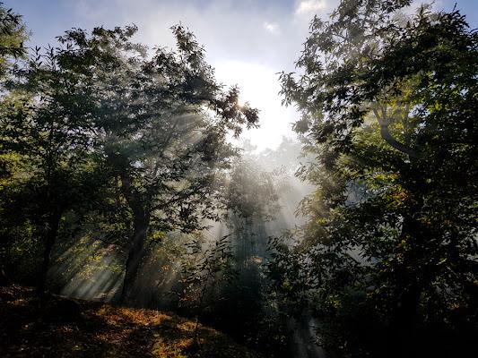 Tra gli alberi di ytse_jam