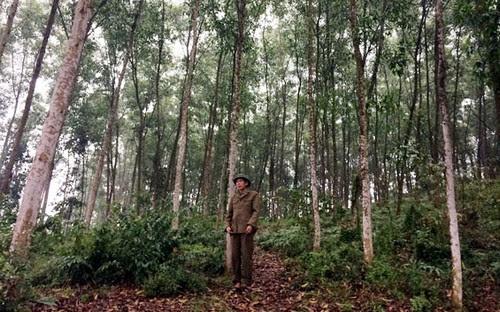 Quản lý bảo vệ rừng phòng hộ Hồ Núi Cốc bền vững