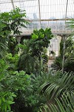 Photo: Bovenaanzicht in de Palmhouse -Kew - Royal Botanical Gardens