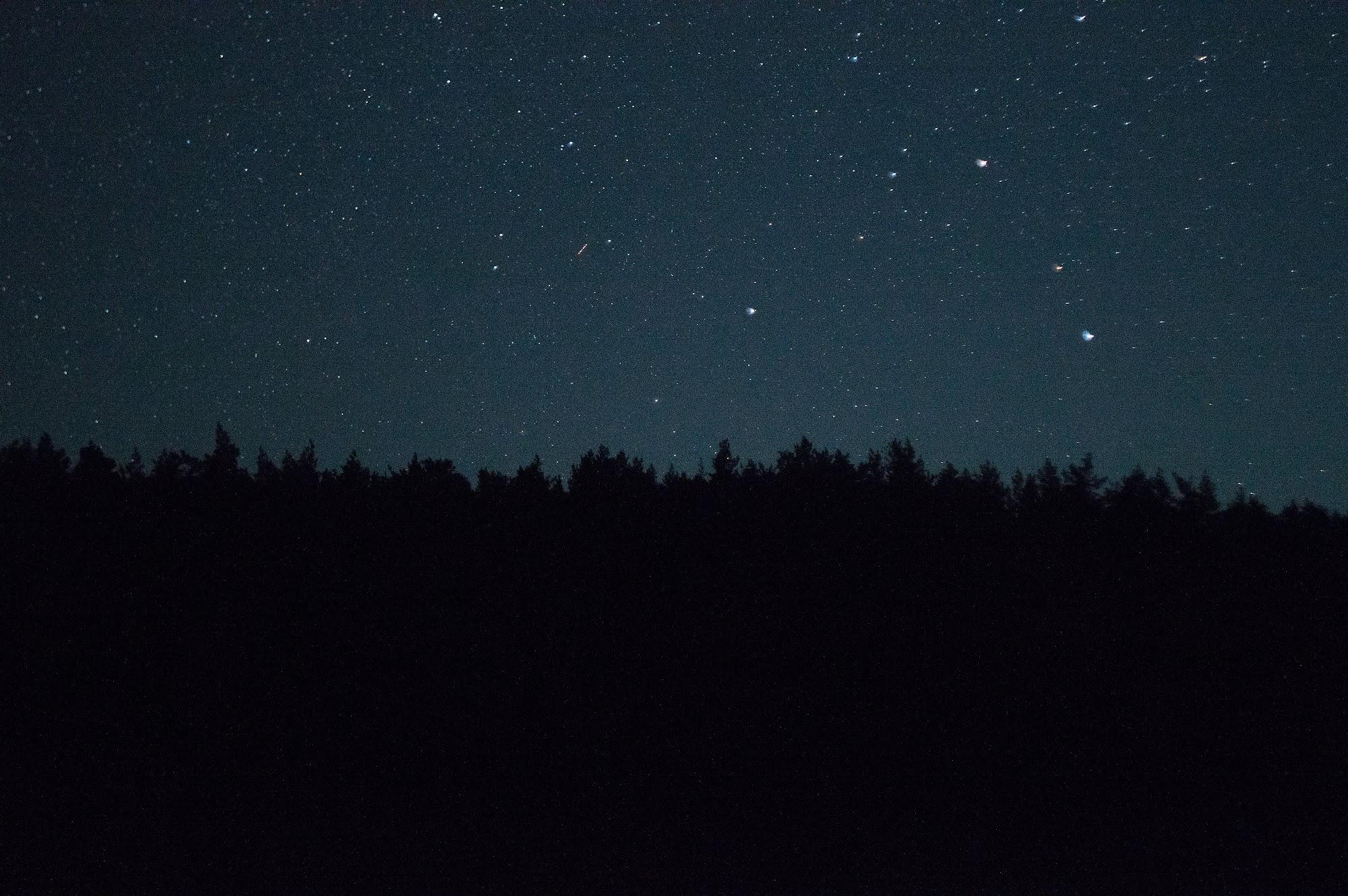 Зорі над лісом