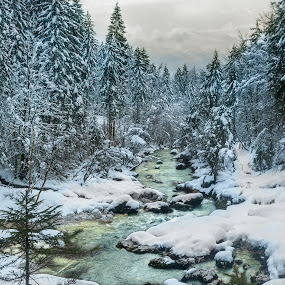 Forest stream by Tom Mat - Landscapes Forests ( stream, winter, creek, snow, trees, forest, stones )