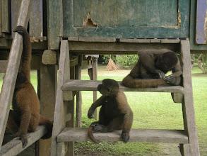 Photo: Monkey Island