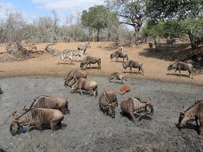 Photo: Mkhuze Game Reserve. Kumasinga Hide