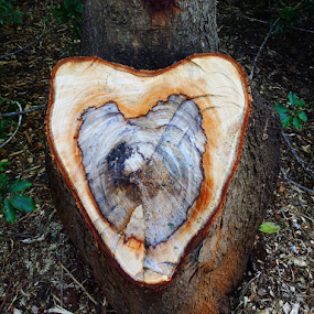 A tree'S heart is a beatiful heart! by Gerrit Symons - Instagram & Mobile Android