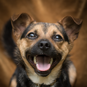 Happy Boy by Myra Brizendine Wilson - Animals - Dogs Puppies ( canine, puppy, black and brown puppy, dog, animal,  )