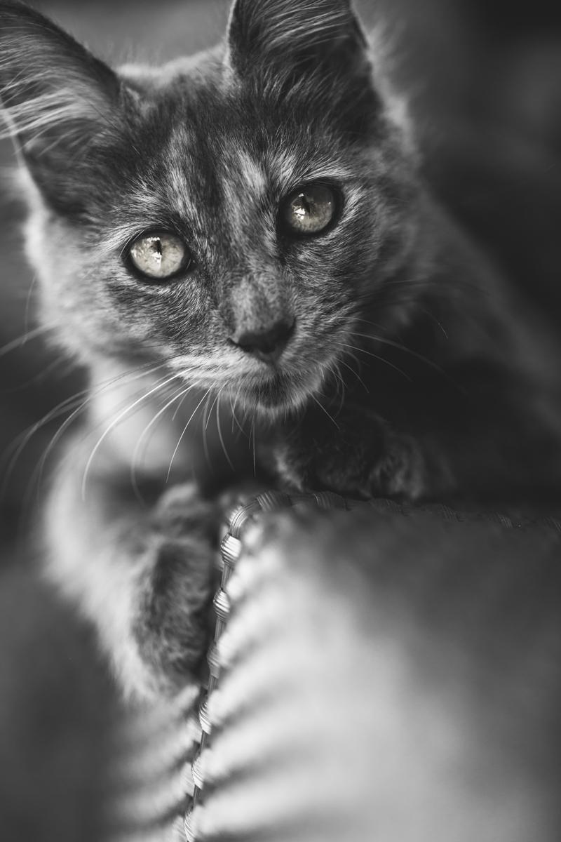Il gatto di Alice di Laura Benvenuti