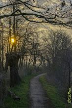 Photo: Natuur.  Foto: Cees Boom.