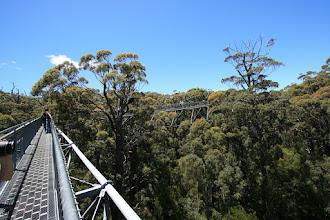 Photo: Tree Top Walk