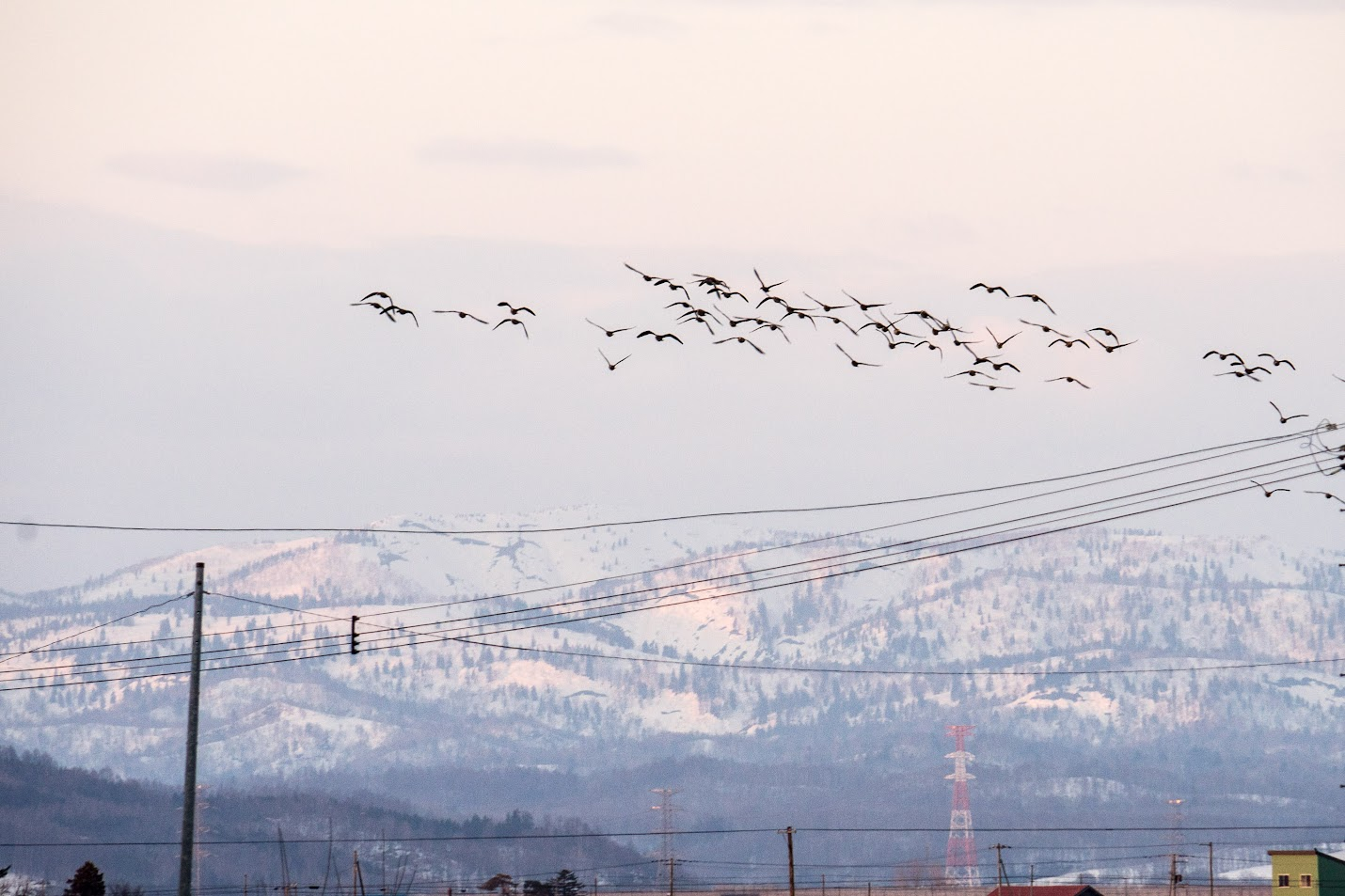 空を横切る雁の群れ
