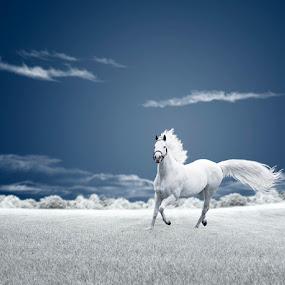 Running free by Caras Ionut - Digital Art Things ( clouds, field, ir, sky, tree, grass, horse, ground, white, bush, whitehorse, running )