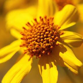 by Amory Godwin Grijaldo - Nature Up Close Flowers - 2011-2013
