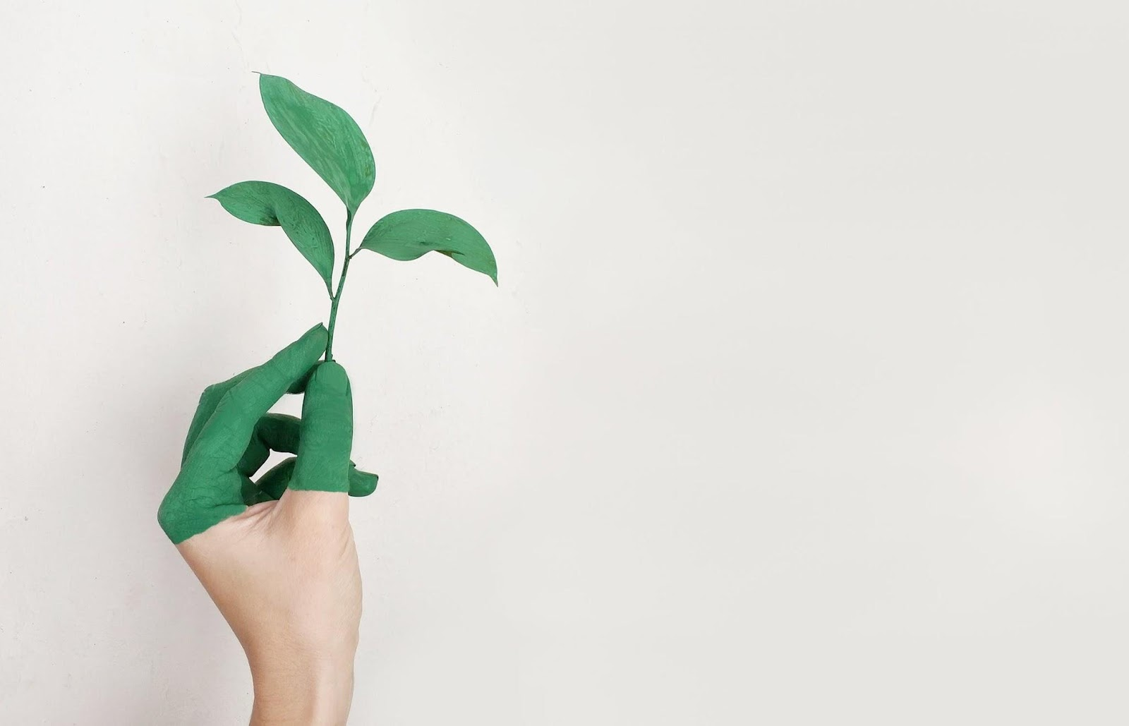 Create A Stylish Home That Is Good For The Environment