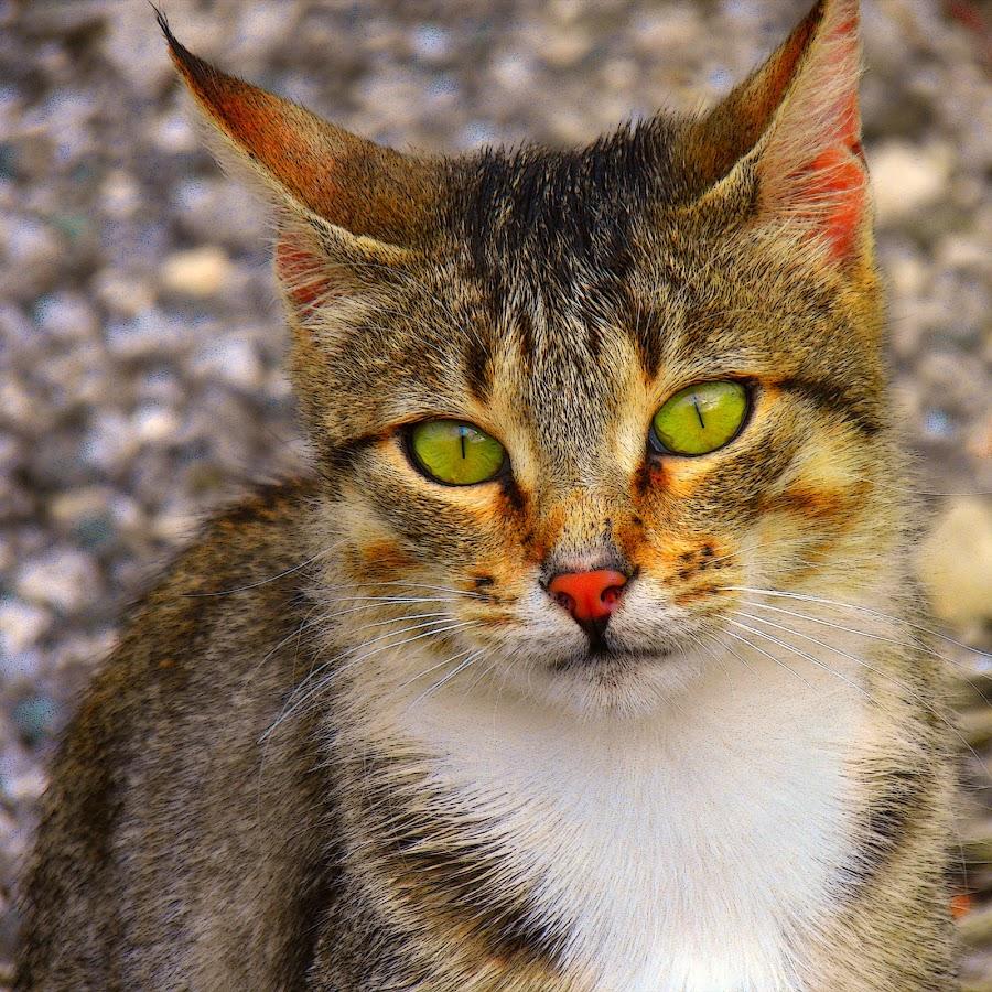 by Slavko Marčac - Animals - Cats Portraits (  )