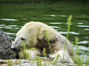 Photo: Knut hat ihn :-)