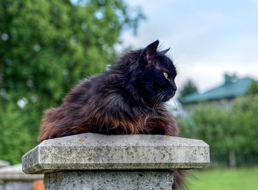 Mazlík by Vláďa Lipina - Animals - Cats Portraits