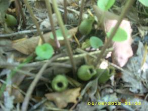 Photo: Little Brown Jug looks green