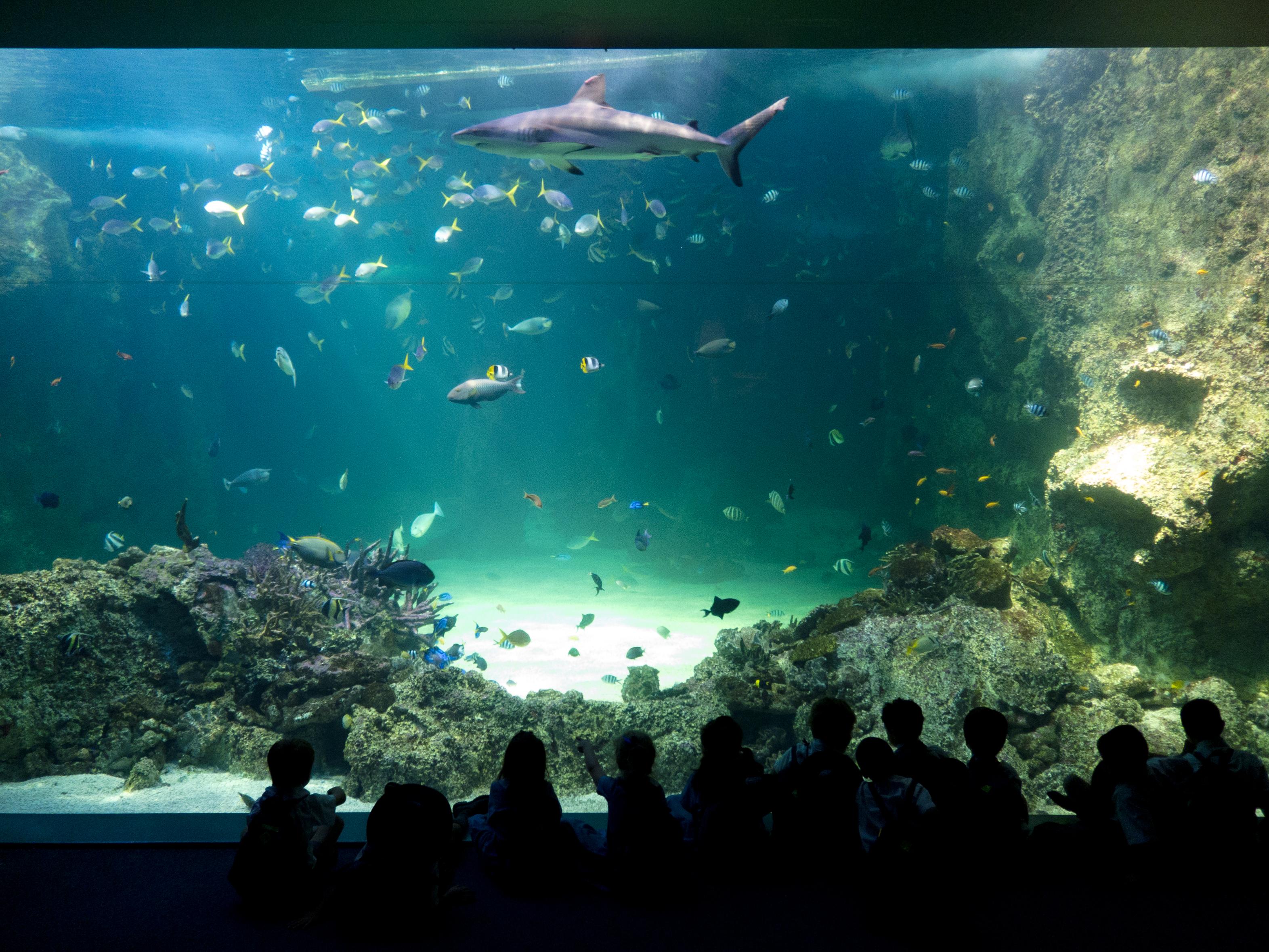 Photo: Sydney Aquarium