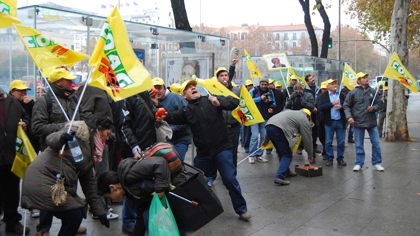 Holanda y Marruecos arruinan los precios de las hortalizas almerienses