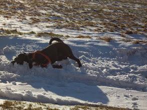 Photo: Sam si užíval navátého sněhu