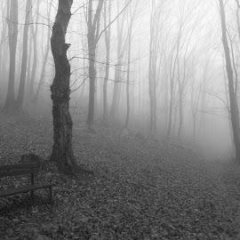 Горска магия. by Georgi Kolev - Black & White Landscapes ( пътека., мъгла., пейка., листа., дървета. )