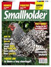 Photo: Cheshire Poultry's prize winning Silver Laced Wyandotte made the cover of this months Smallholder Magazine. This increases Cheshire Poultry's reputation as one of the best providers of quality exhibition poultry in the country and as far as wyandottes and in particular laced wyandottes go Cheshire Poultry leads the way with multiple award winning birds producing fantastic hatching eggs for sale!