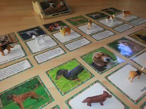 Photo: Lesedose Hunde -> Endlich Pause