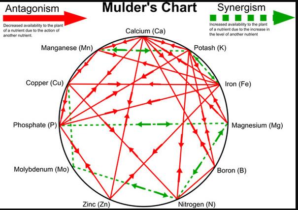 Biểu đồ của Mulder cho thấy sự tương tác tích cực và tiêu cực giữa các chất dinh dưỡng đối với cây trồng. Mũi tên màu đỏ: tương tác tiêu cực. Mũi tên màu xanh: tương tác tích cực