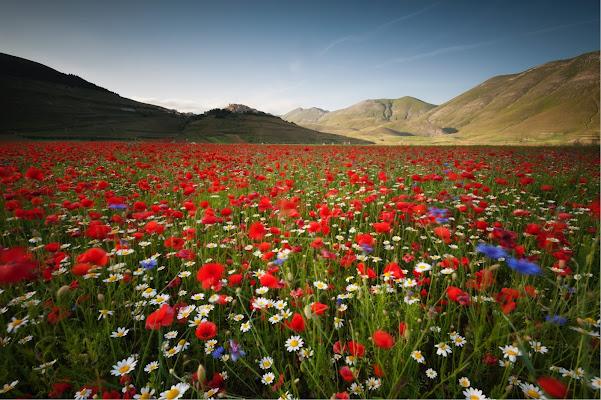 Red Landscape di Capatazboss