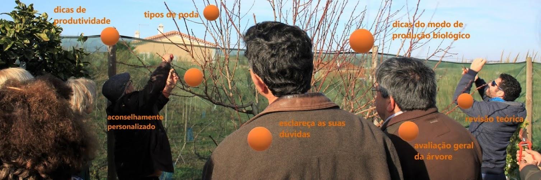 Curso Avançado de Poda em Árvores de Fruto – 12 Jan 2019 – Curso Prático (7h)