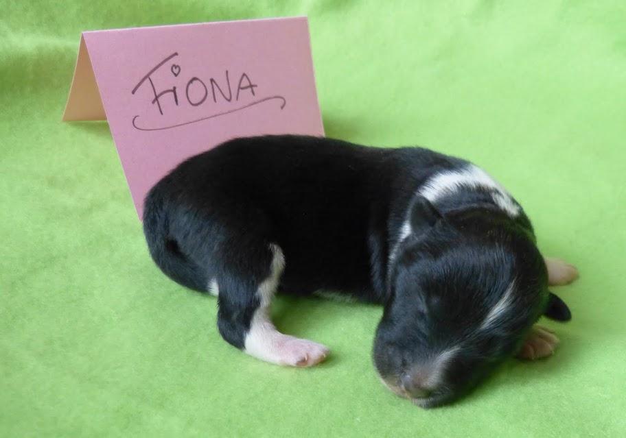 Fiona nach der Geburt