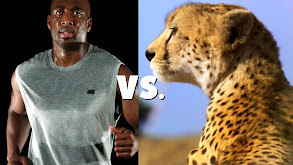 Animal vs. Human thumbnail