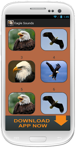 Eagle and Hawk Sounds