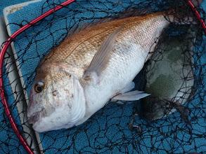 Photo: おおおーっ!デカいっ! ジャンボ真鯛とオナガのダブル!