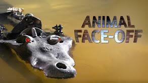 Animal Face-Off thumbnail