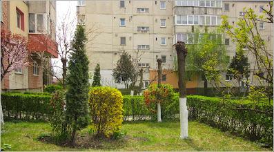 Photo: Turda, Calea Victoriei, Nr. 98 - spatiu verde - 2019.04.08