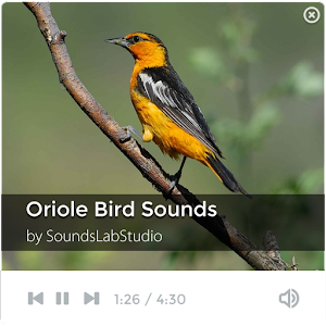 download Oriole Bird Sounds apk