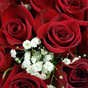 by Maricor Bayotas-Brizzi - Flowers Flower Arangements (  )